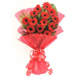 Impressive Red Coloured Gerbera Bundle