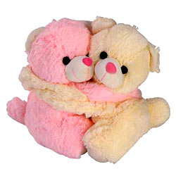 Exclusive Pair of Teddies with Intense Affection