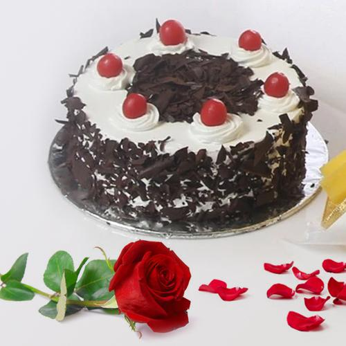 Enticing Black Forest Cake with Red Rose