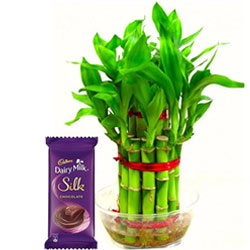 Sumptuous Combo of 2 Tier Bamboo Plant N Cadbury Silk Chocolate Bar