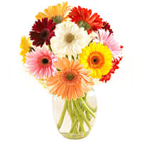 Stylish Arrangement of Colorful Gerberas in a Vase