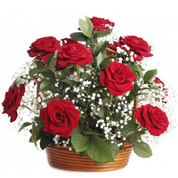 Striking Red Roses Arrangement for Birthday