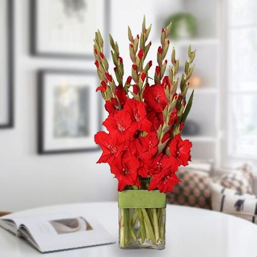 Mesmerizing Red Gladiolus in a Glass Vase
