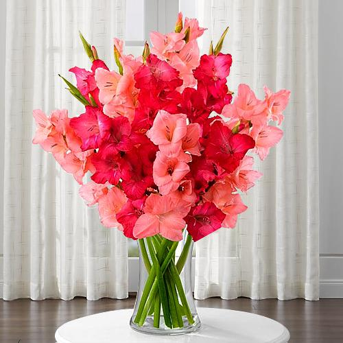 Delicate Pinkish Delight Gladiolus in a Glass Vase