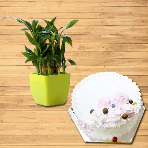 Wonderful 2 Tier Lucky Bamboo Plant with Vanilla Cake