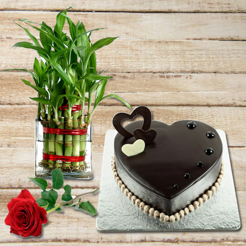 Budding 2 Tier Lucky Bamboo Plant in a Glass Pot with Chocolate Cake N Red Rose